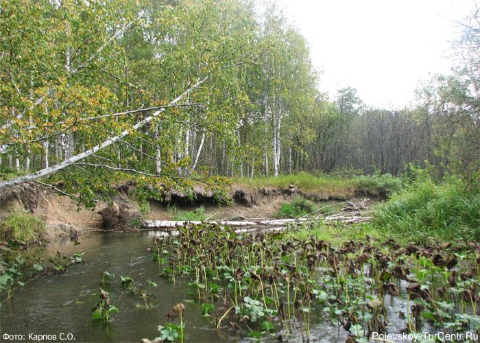 Река Западная Чусовая в окрестностях южной части города Полевского. Фото Карпов С.О., 2012 г.