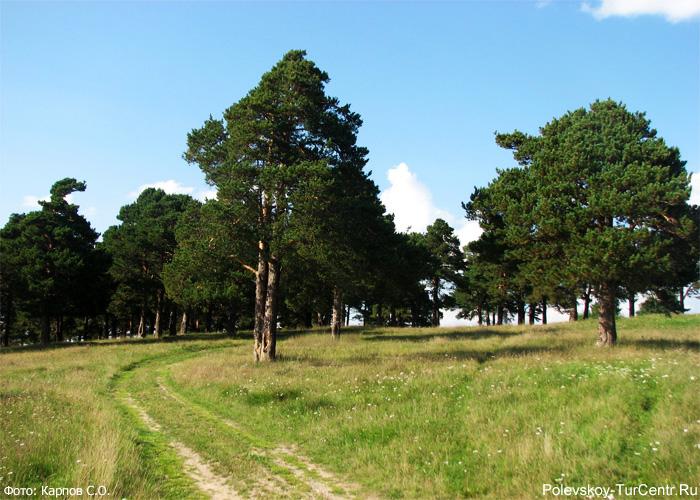 Сосновая горка в селе Полдневая. Фото Карпова С.О.