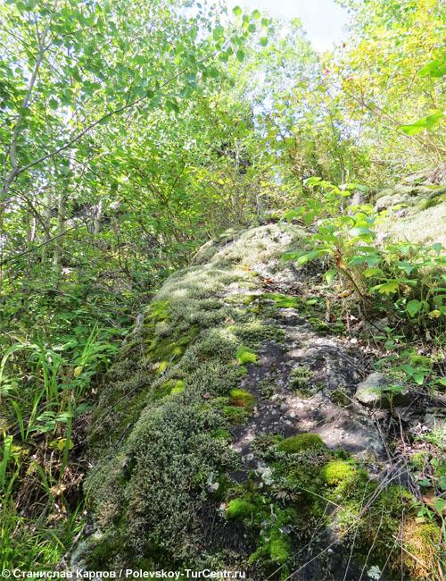 Замшелые скалы Сокольего Камня. Фото Карпова С.О.
